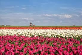 Top 5 vườn hoa quyến rũ ở Châu Âu không đi kẻo tiếc hùi hụi